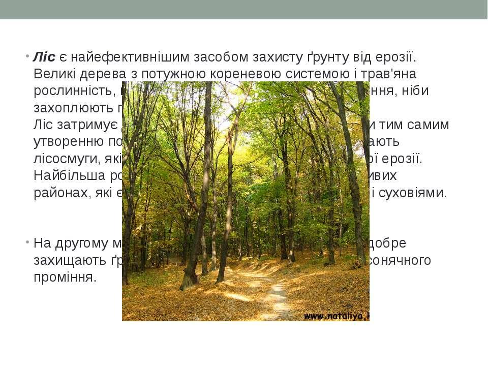 Ліс є найефективнішим засобом захисту ґрунту від ерозії. Великі дерева з поту...