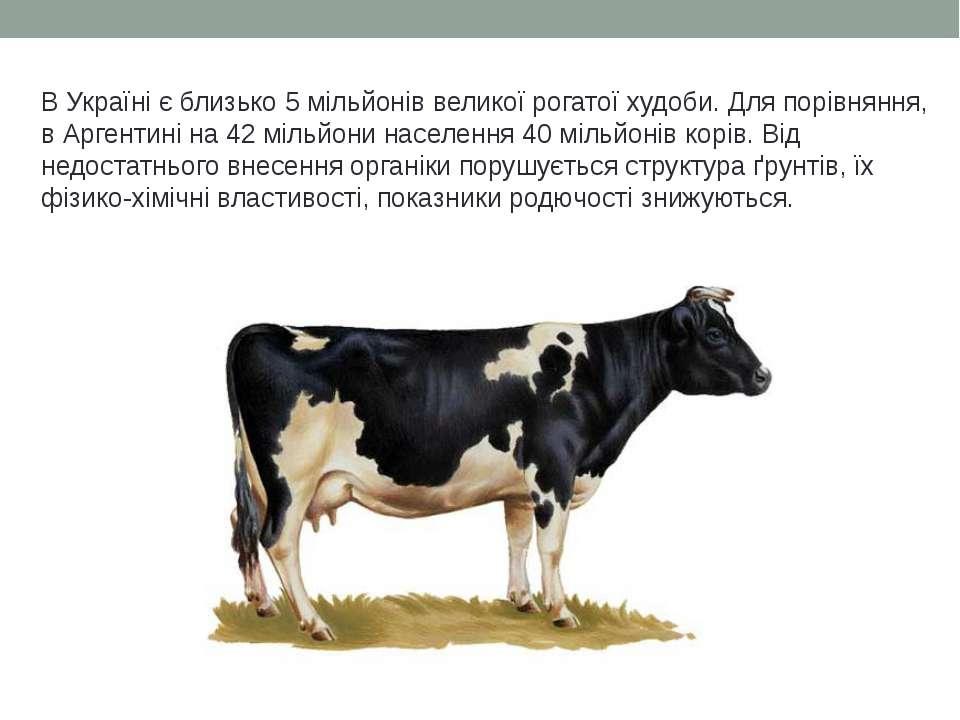 В Україні є близько 5 мільйонів великої рогатої худоби. Для порівняння, в Арг...
