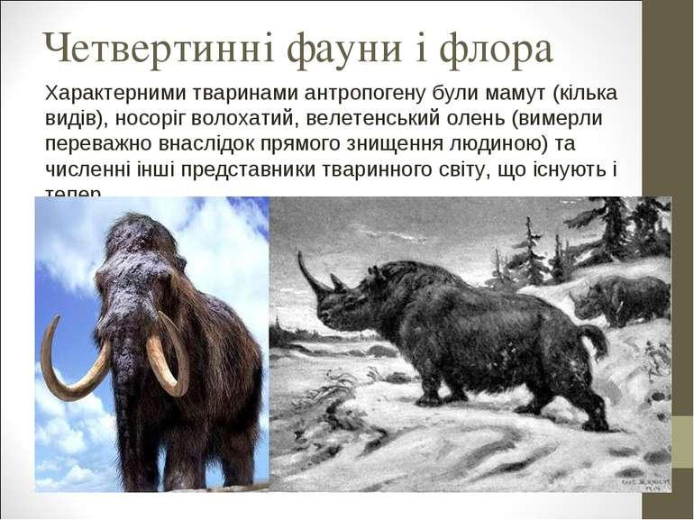Четвертинні фауни і флора Характерними тваринами антропогену були мамут (кіль...