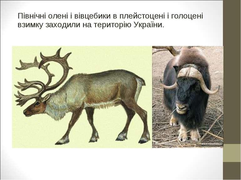 Північні олені і вівцебики в плейстоцені і голоцені взимку заходили на терито...