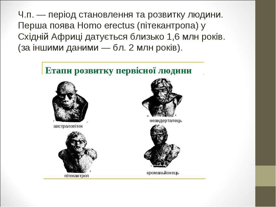 Ч.п. — період становлення та розвитку людини. Перша поява Homo erectus (пітек...