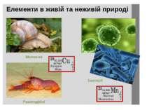 Елементи в живій та неживій природі Молюски Ракоподібні Бактерії