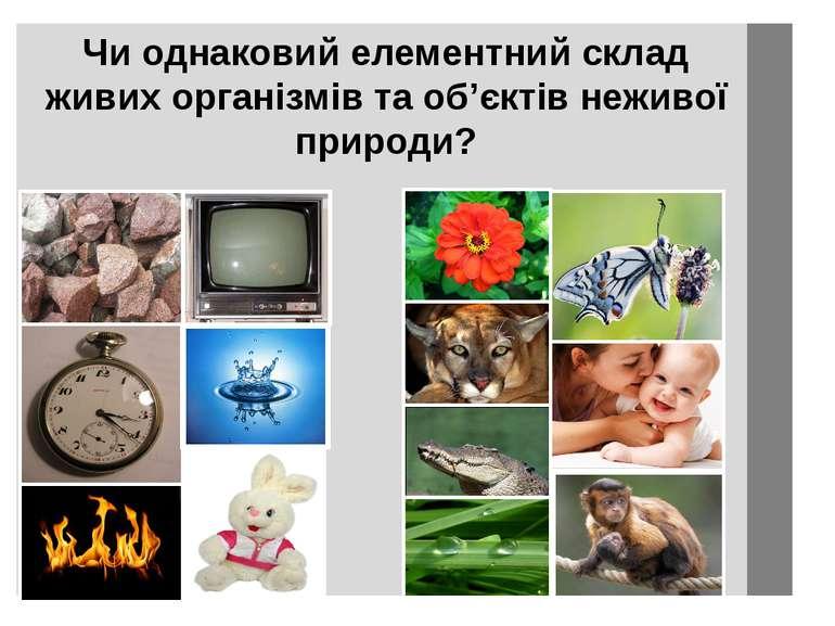 Чи однаковий елементний склад живих організмів та об'єктів неживої природи?