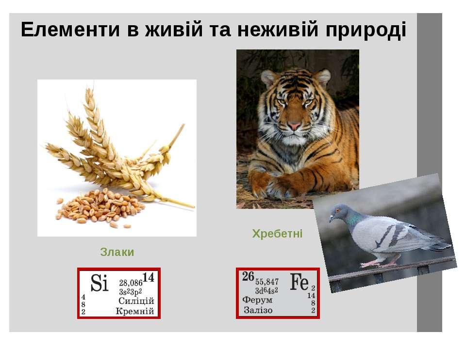 Елементи в живій та неживій природі Хребетні Злаки