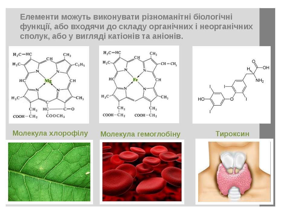 Елементи можуть виконувати різноманітні біологічні функції, або входячи до ск...