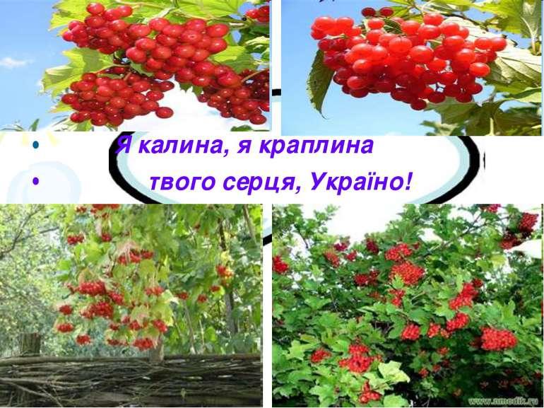 Я калина, я краплина твого серця, Україно!