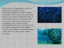 Риби можуть об'єднуватися в зграї (або тимчасові скупчення) з метою розмножен...
