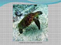 Гавайськазелена морська черепаха