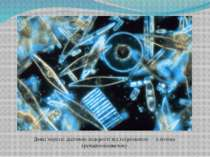 Деякі морськідіатомові водорості під мікроскопом— ключова групафітопланктону