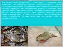 Для багатьох видів безхребетних — гіллястовусих та зяброногих раків, коловерт...