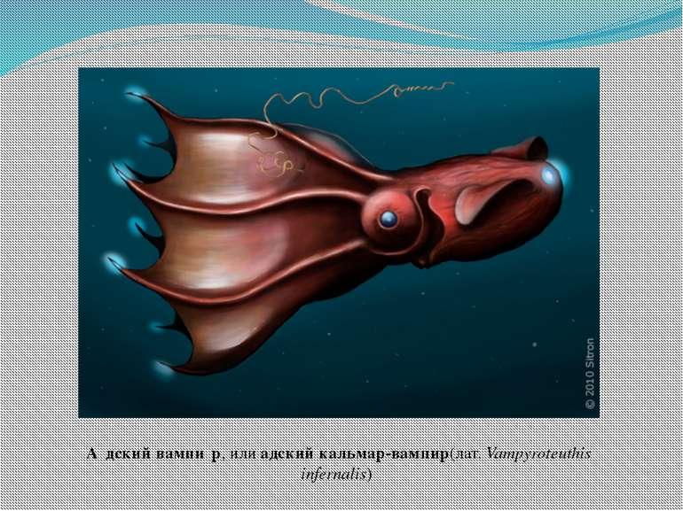 А дский вампи р, илиадский кальмар-вампир(лат.Vampyroteuthis infernalis)