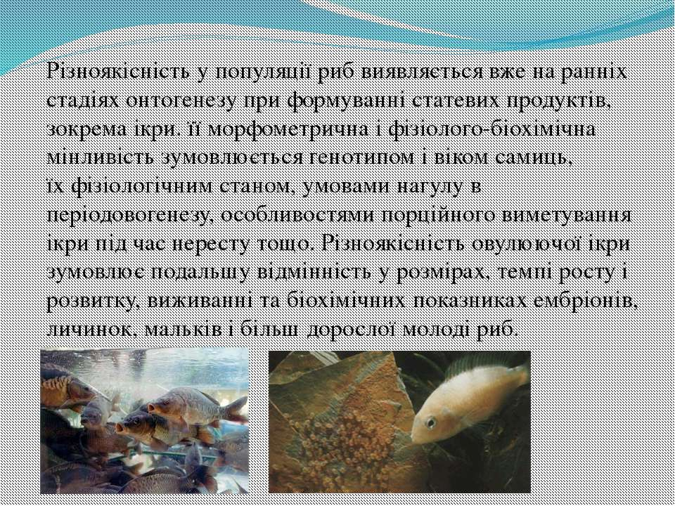 Різноякісність у популяції риб виявляється вже на ранніх стадіях онтогенезу п...