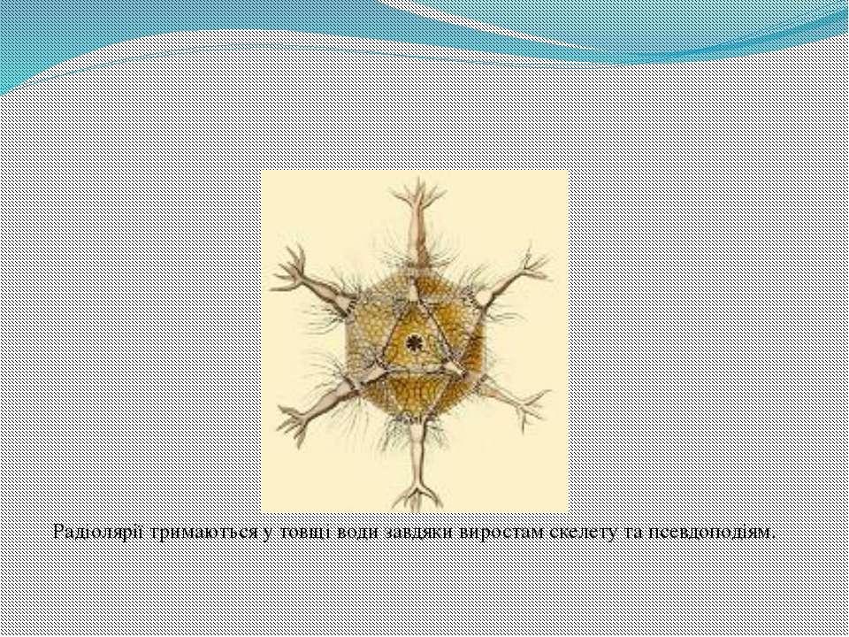 Радіолярії тримаються у товщі води завдяки виростам скелету та псевдоподіям.