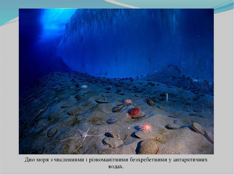Дно моря з численними і різноманітними безхребетнимиу антарктичних водах.