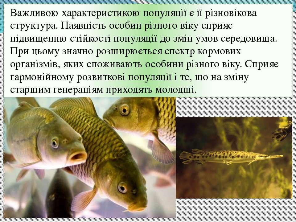 Важливою характеристикою популяції є її різновікова структура. Наявність особ...