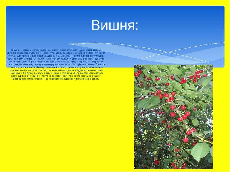 Вишня — символ світового дерева, життя; символ України, рідної землі; матері;...