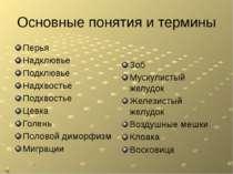 Основные понятия и термины Перья Надклювье Подклювье Надхвостье Подхвостье Це...