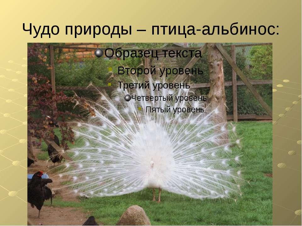 Чудо природы – птица-альбинос: FuckYouBill: Положение в современном мире С 16...