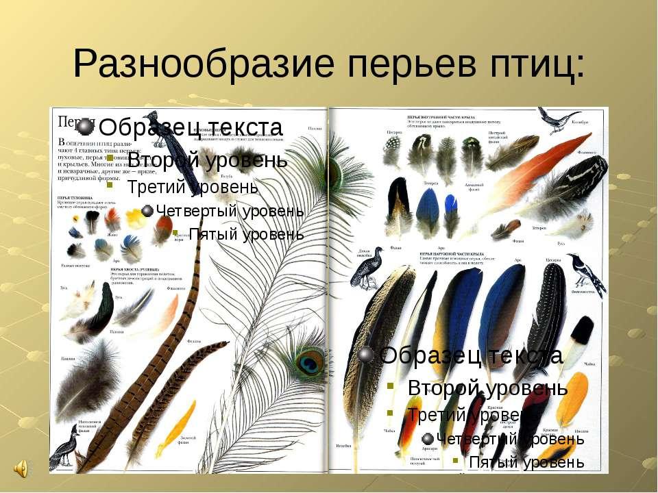 Разнообразие перьев птиц: