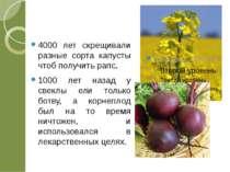 4000 лет скрещивали разные сорта капусты чтоб получить рапс. 1000 лет назад у...