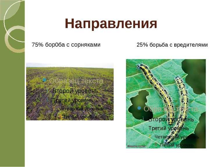 75% бор0ба с сорняками 25% борьба с вредителями Направления