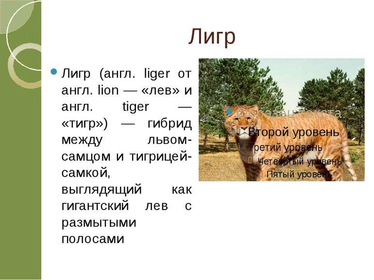Лигр Лигр (англ. liger от англ. lion — «лев» и англ. tiger — «тигр») — гибрид...