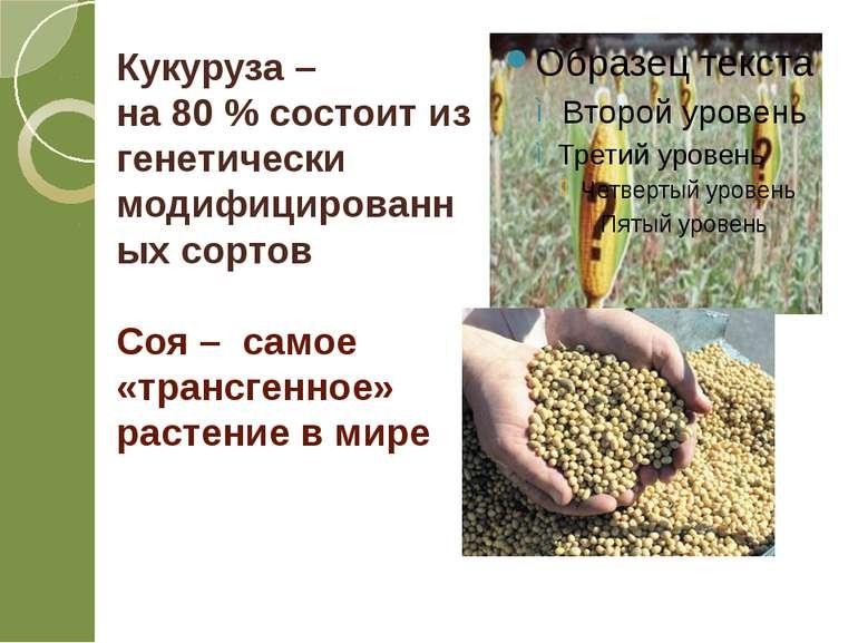 Кукуруза – на 80 % состоит из генетически модифицированных сортов Соя – самое...