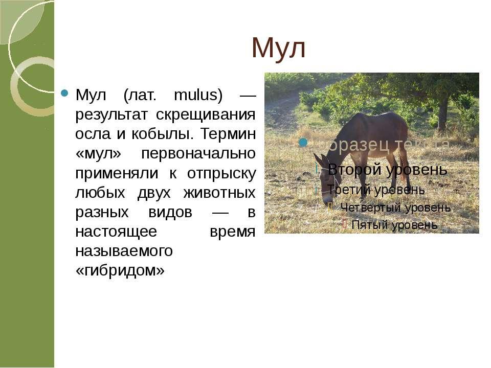 Мул Мул (лат. mulus) — результат скрещивания осла и кобылы. Термин «мул» перв...