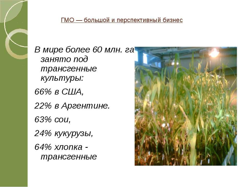 ГМО — большой и перспективный бизнес В мире более 60 млн. га занято под транс...
