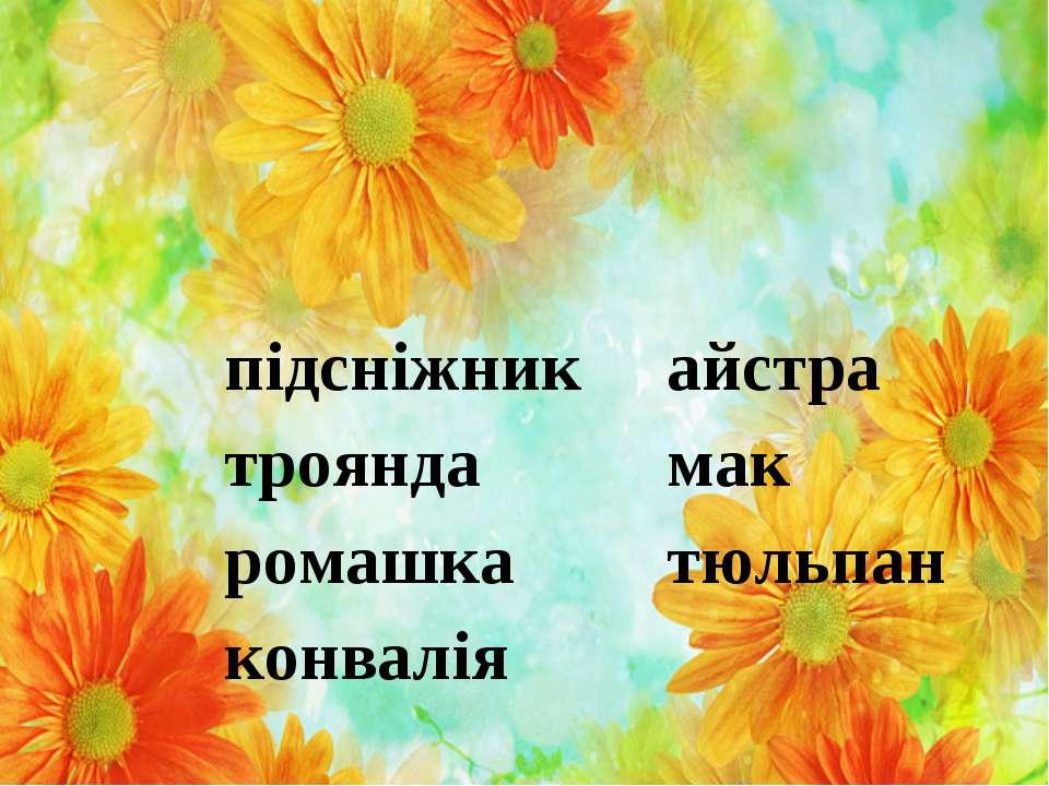 підсніжник айстра троянда мак ромашка тюльпан конвалія