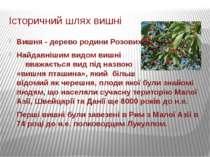 Історичний шлях вишні Вишня- дерево родини Розових. Найдавнішимвидомвишні...