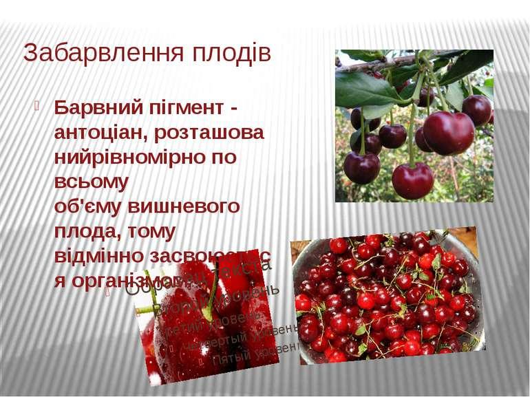 Забарвлення плодів Барвний пігмент-антоціан,розташованийрівномірно по всьом...