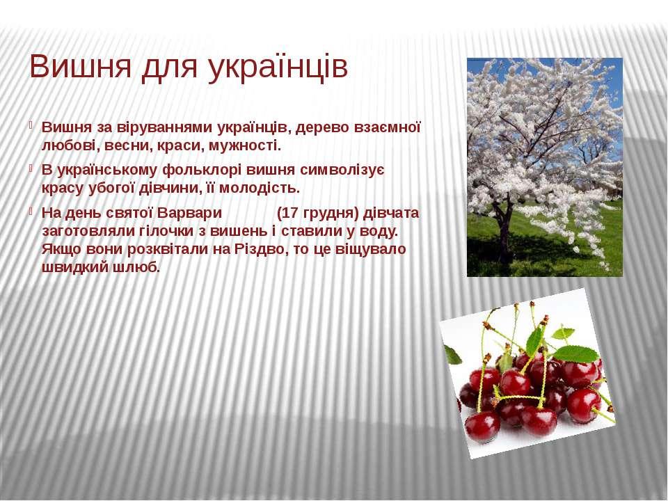 Вишня для українців Вишня за віруваннями українців, дерево взаємної любові, в...
