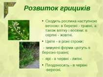 Сходить рослина наступною весною: в березні - травні, а також влітку і восени...