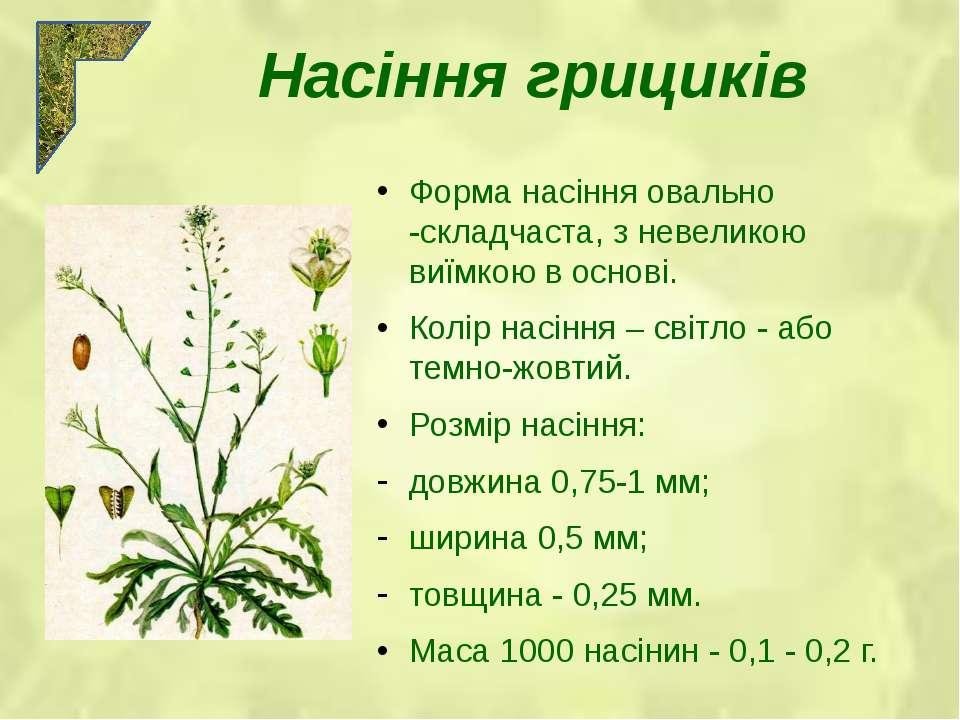 Форма насіння овально -складчаста, з невеликою виїмкою в основі. Колір насінн...