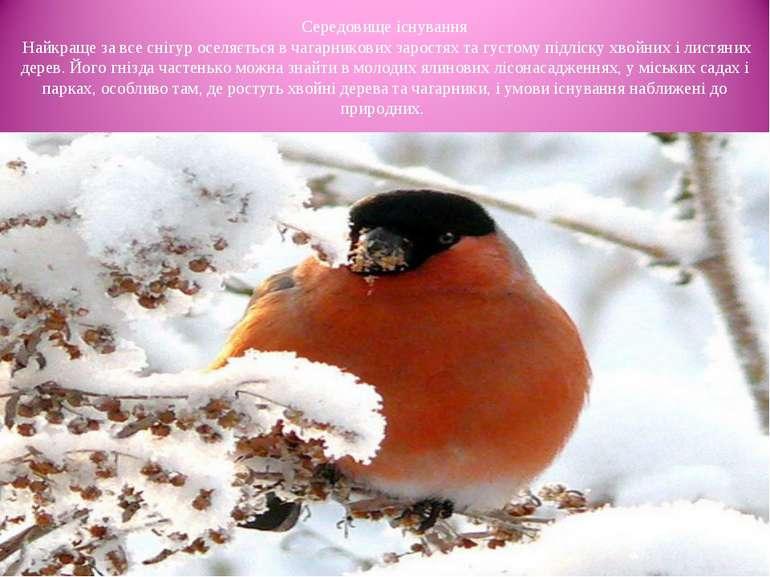 Середовище існування Найкраще за все снігур оселяється в чагарникових заростя...