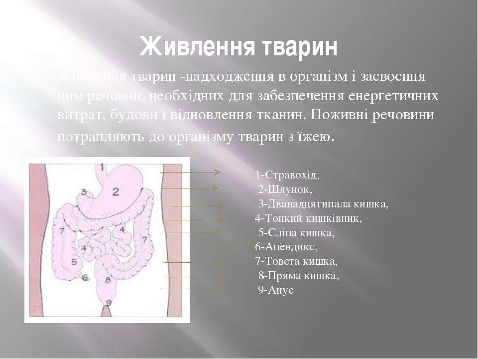 Живлення тварин Живлення тварин -надходження в організм і засвоєння ним речов...