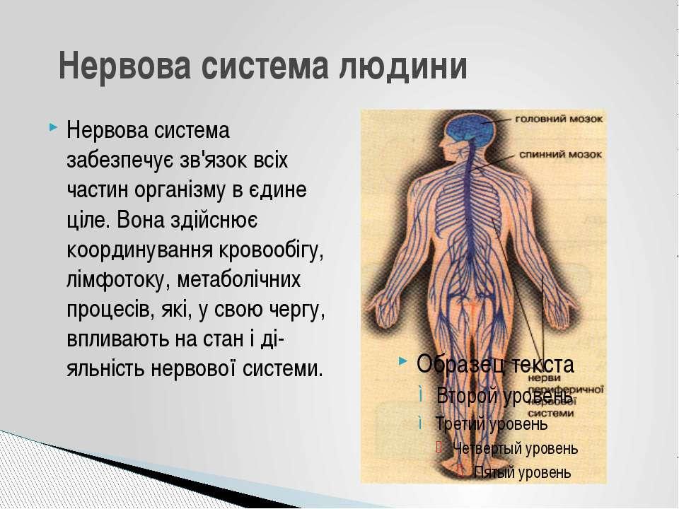 Нервова система забезпечує зв'язок всіх частин організму в єдине ціле. Вона з...