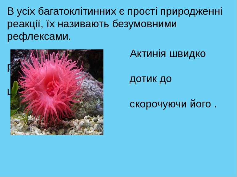 В усіх багатоклітинних є прості природженні реакції, їх називають безумовними...