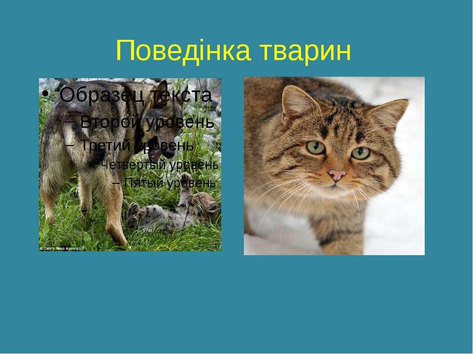 Поведінка тварин