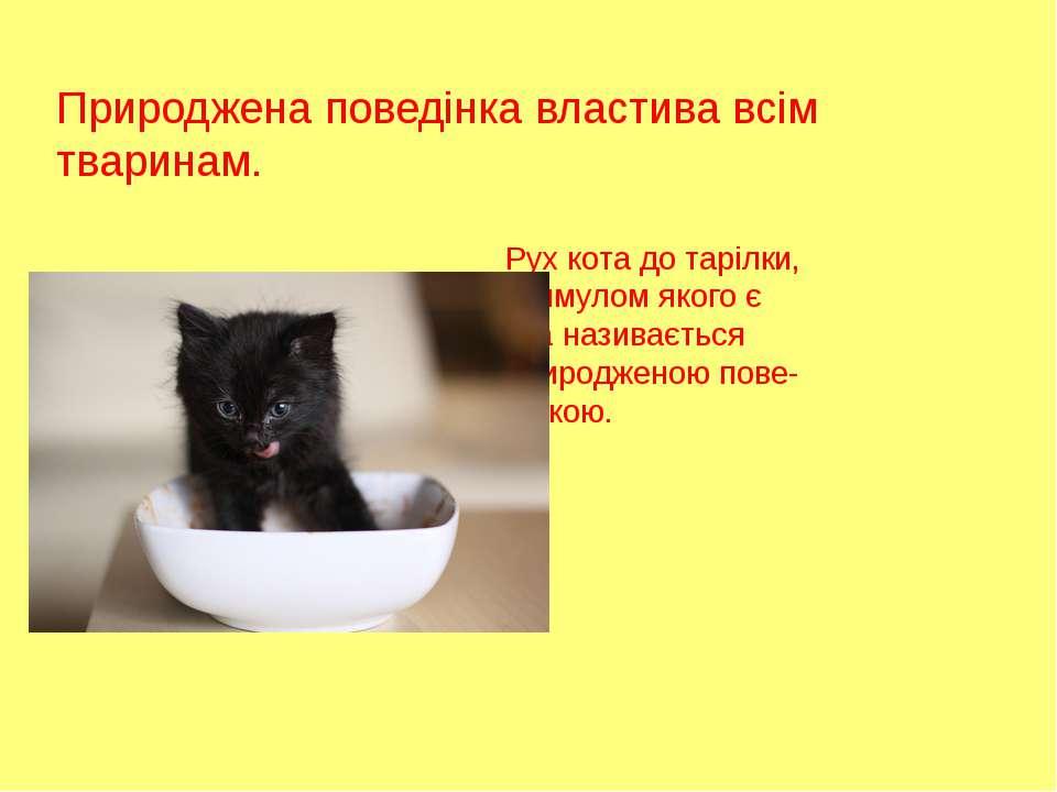 Природжена поведінка властива всім тваринам. Рух кота до тарілки, стимулом як...