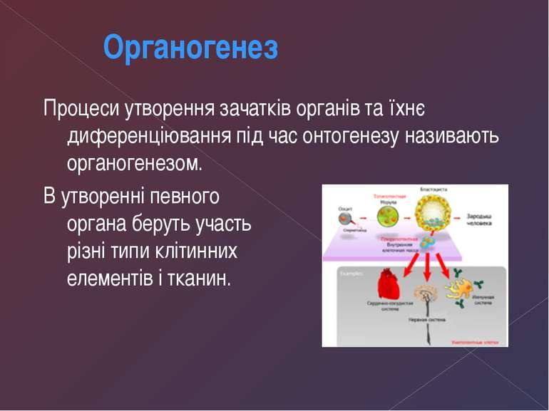 Процеси утворення зачатків органів та їхнє диференціювання під час онтогенезу...