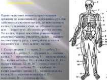 Опорно-рухова система Одним з важливих моментів пристосування організму до на...