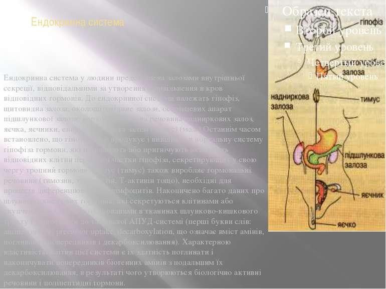 Ендокринна система Ендокринна система у людини представлена залозами внутрішн...