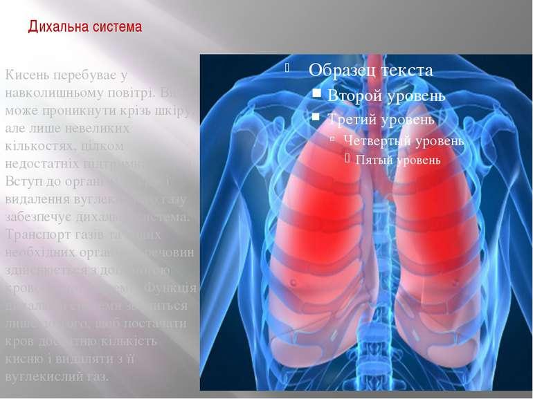 Дихальна система Кисень перебуває у навколишньому повітрі. Він може проникнут...