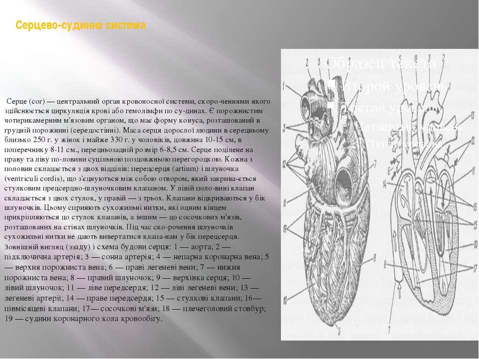 Серцево-судинна система Серце (cor) — центральний орган кровоносної системи,...