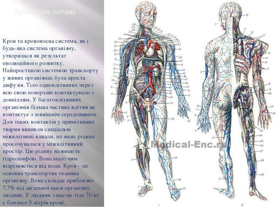 Кровоносна система Кров та кровоносна система, як і будь-яка система організм...