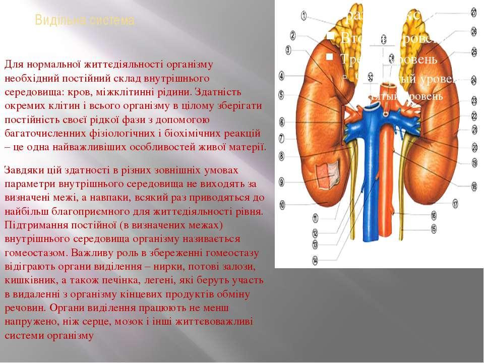 Видільна система Для нормальної життєдіяльності організму необхідний постійни...
