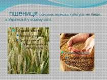 пшениця основна зернова культура не лише в Україні,а й у всьому світі.