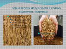 зерно,зелену масу,а часто й солому згодовують тваринам